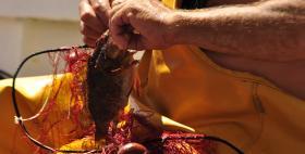 Pesca artigianale_AMP Asinara_Uniss